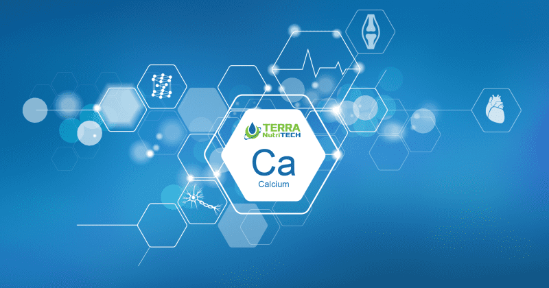 Why is calcium so important for animal health during calving season? 30