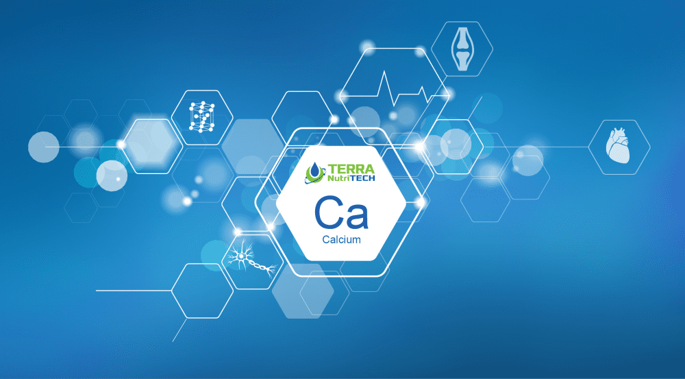 Why is calcium so important for animal health during calving season? 1